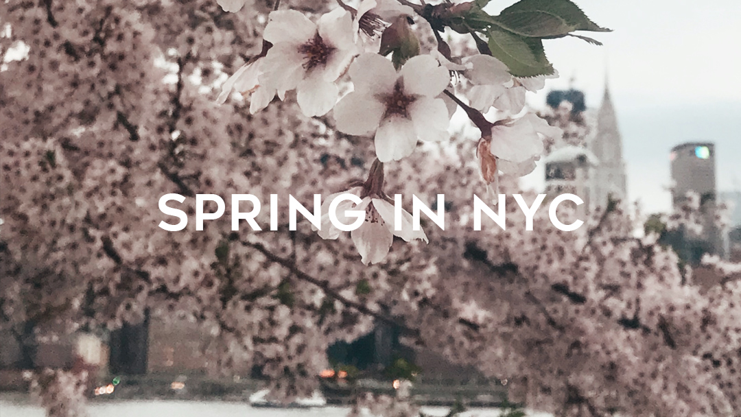 0 spring in NYC cherry blossoms