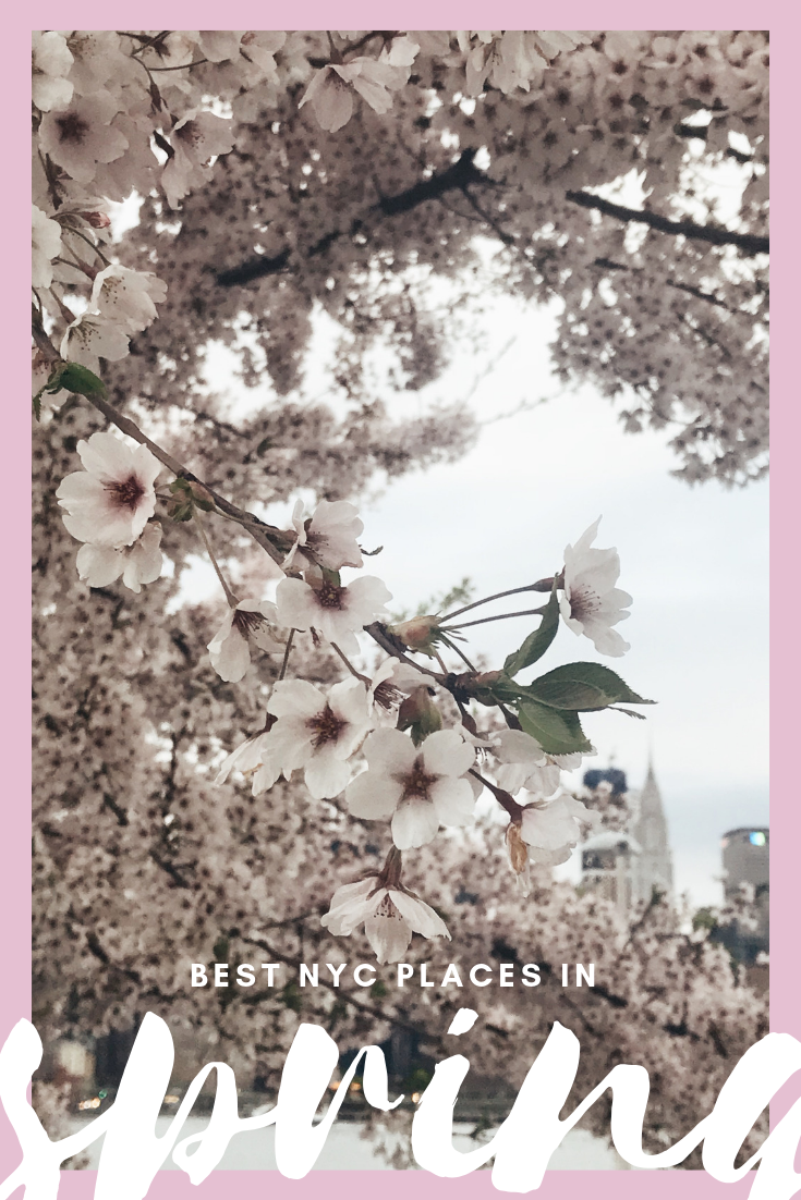 Best NYC Places Spring Cherry Blossoms