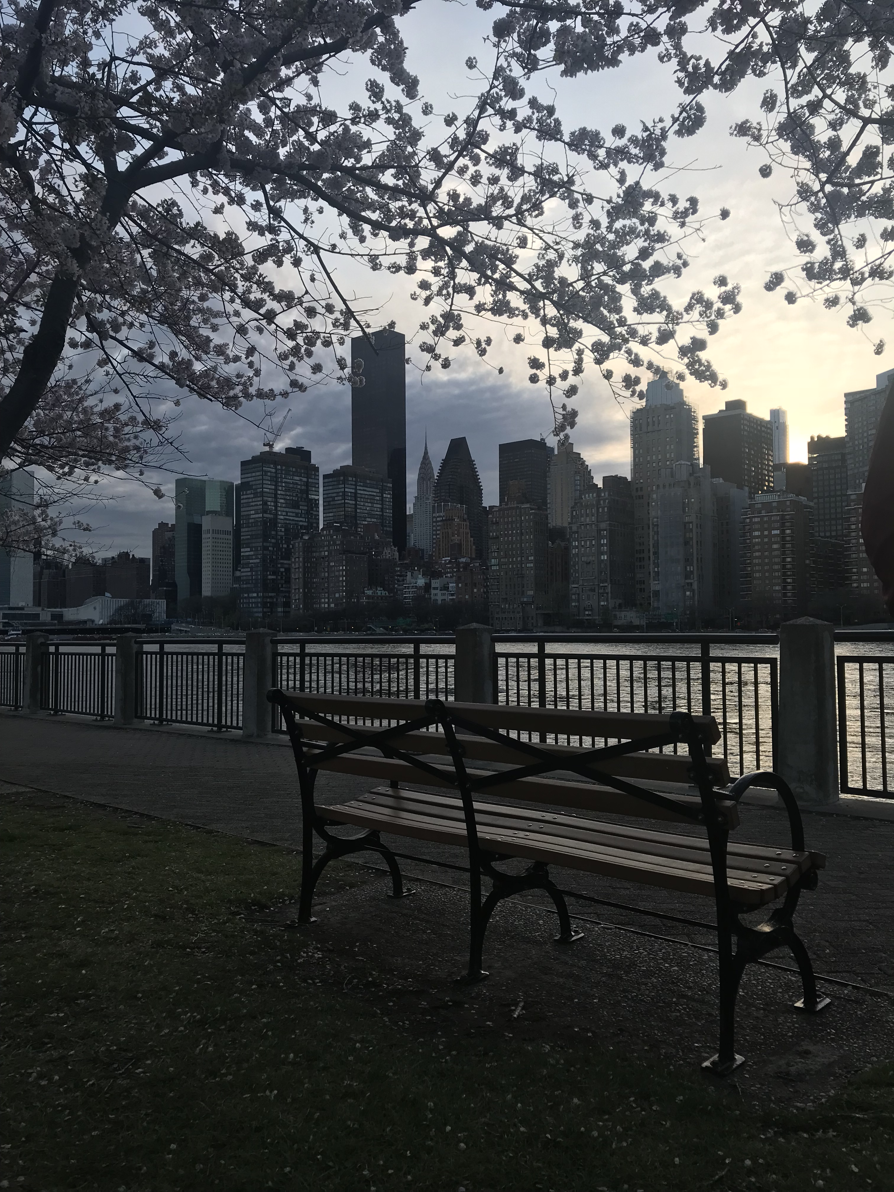 Roosevelt Island NYC Spring cherry blossoms