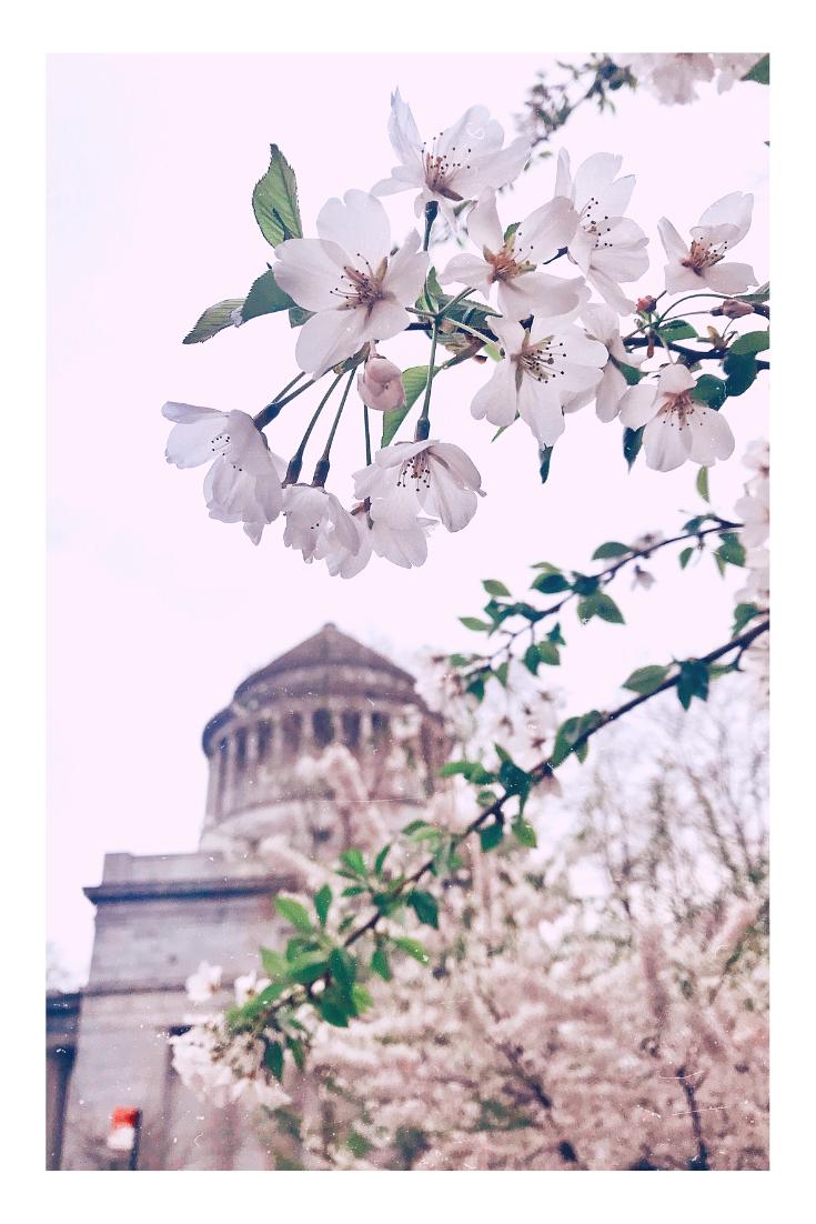 Spring in NYC at Grant's memorial Sakura Park Riverside