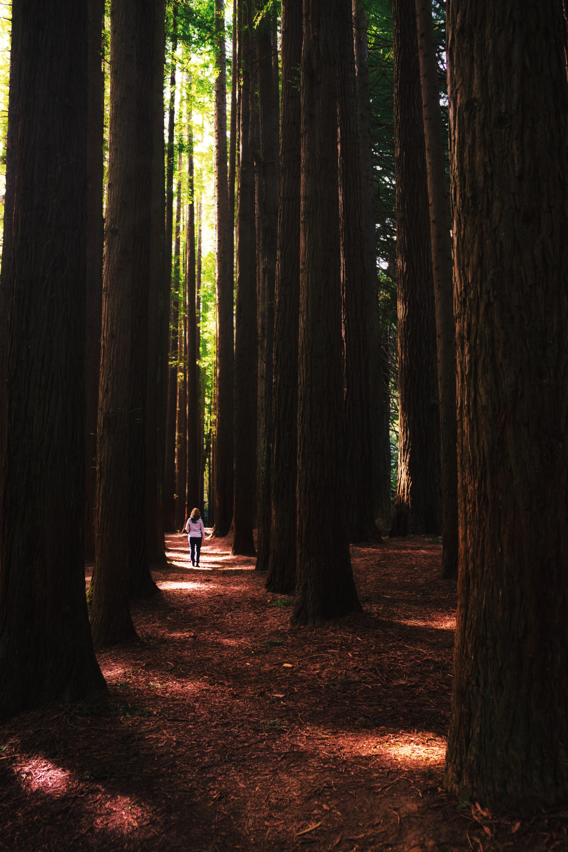 17. Redwoods tobias-giess-816ii2SYNWk-unsplash