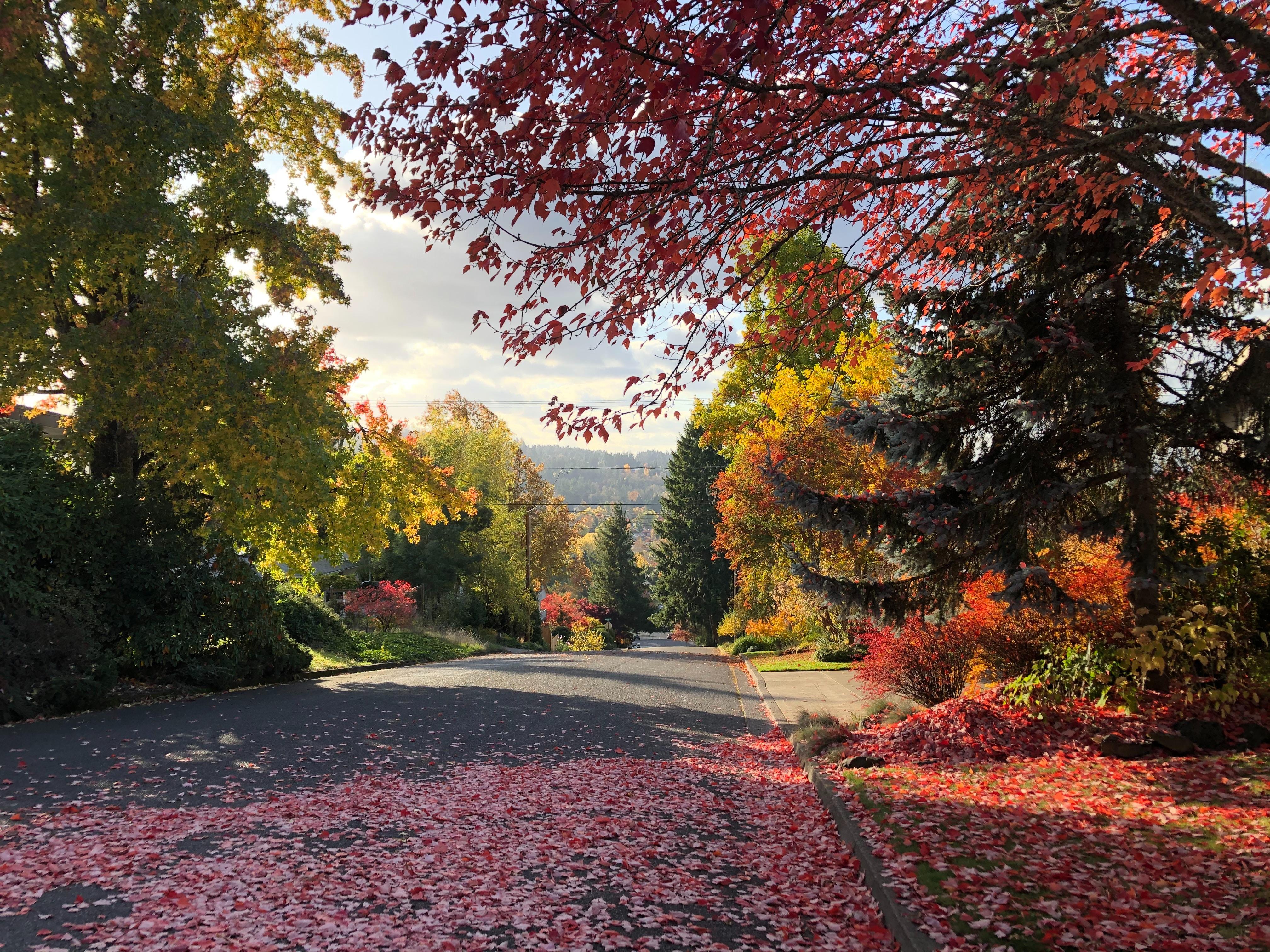 24. Eugene Oregon miguel-flores-hk4bXX9eGTE-unsplash